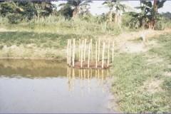 voorbeeld-visvijver